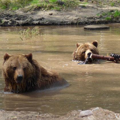 Un, protams, peldēties!