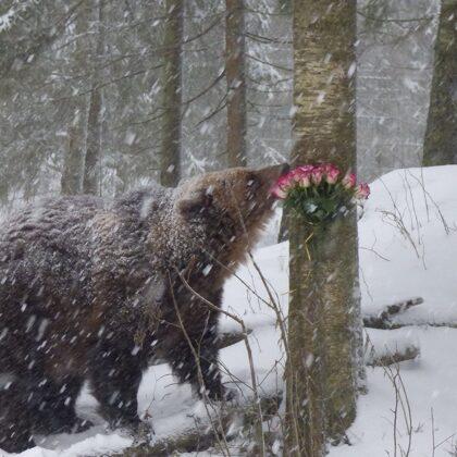 Jubilāre saņēma arī ziedus - 18 rozes bez ērkšķiem!