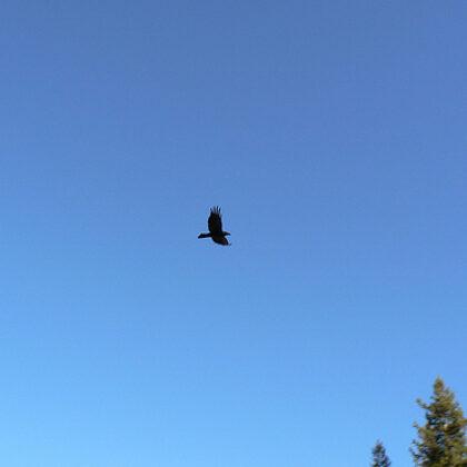 Atbrauciet uz Līgatnes dabas takām un paceliet acis uz debesīm - tur jau es būšu! Krāāā!